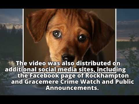 17 Year Old Girl Who Filmed Herself Kicking Pet Puppy Is Banned