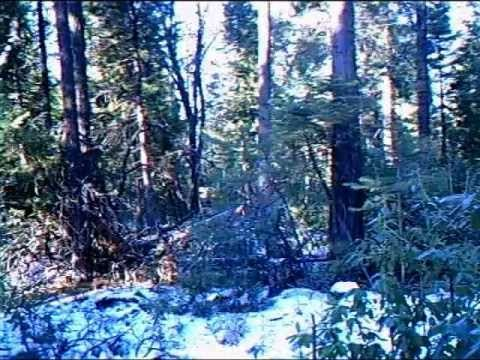 A SQUATCH SHAKING OUR TRAIL CAM AT THE BAIT TRAP