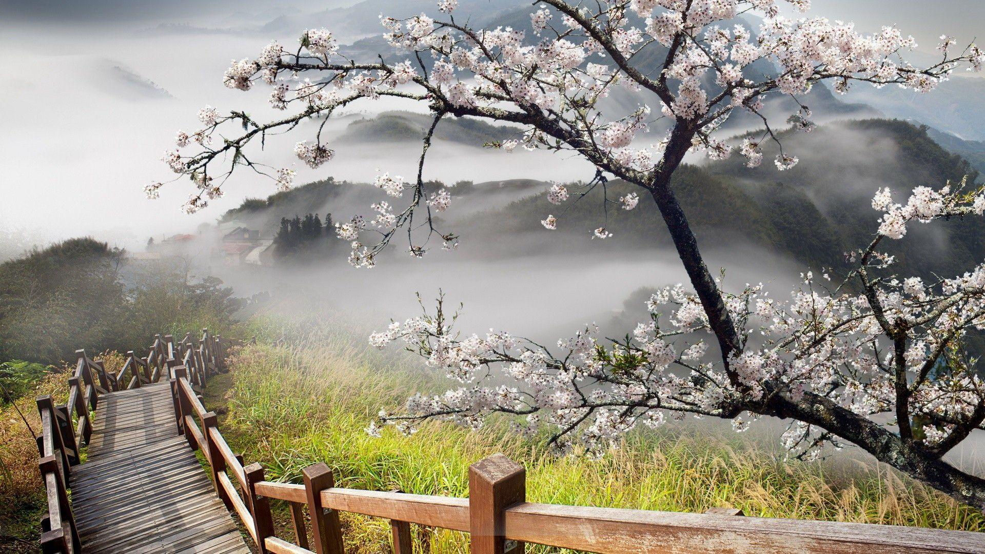 Landscape Everest Flower Nepal