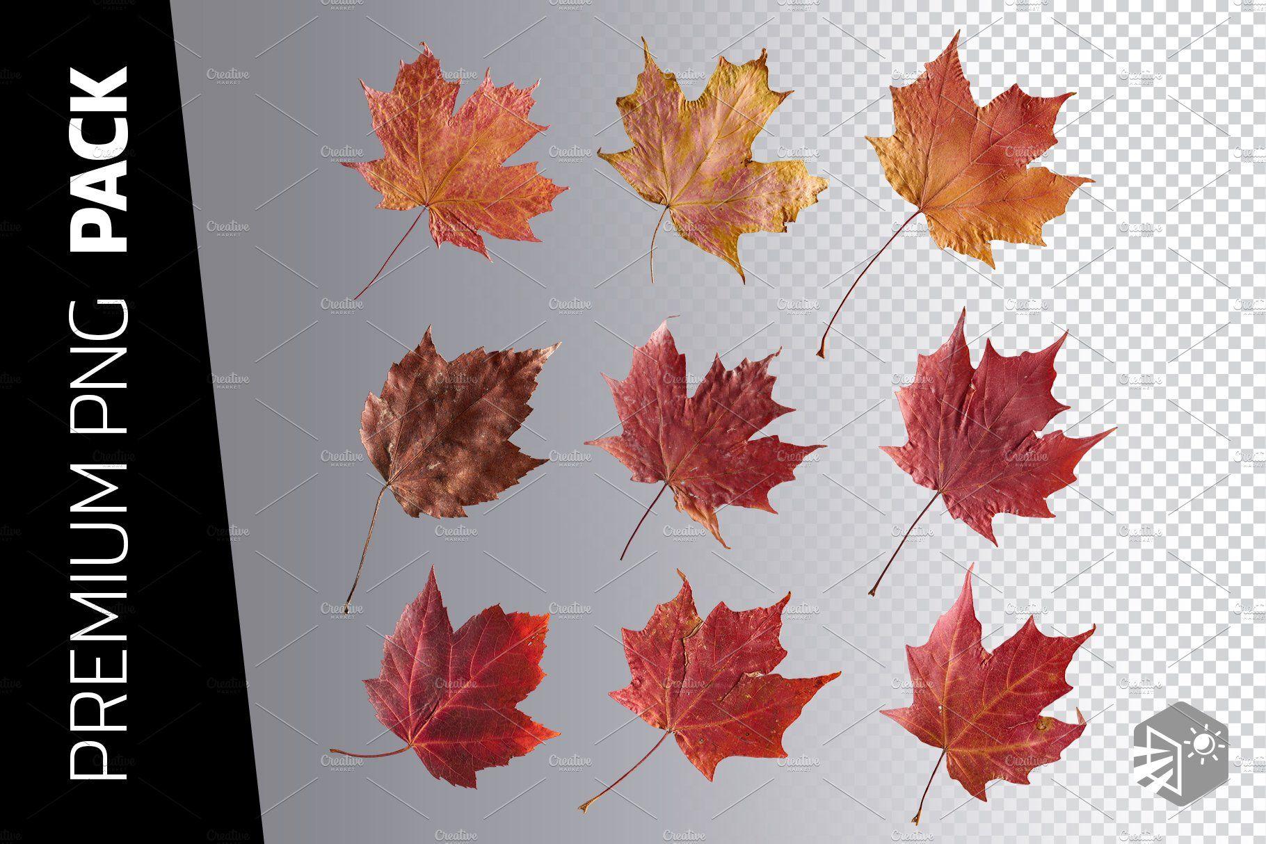 9 Red Maple Leaf Png Images Maple Leaf Png Images Png
