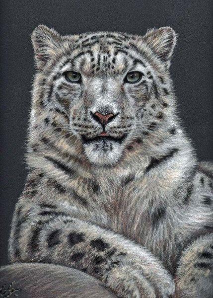 schneeleopard kunstdruck 20x30 cm tolle zeichnung von artsanddogs arts dogs schneeleopard. Black Bedroom Furniture Sets. Home Design Ideas