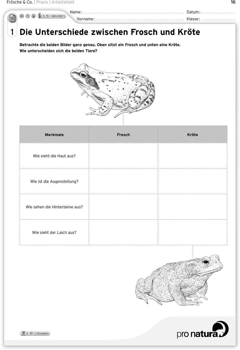 Frosche Amp Co Ein Leben Zwischen Wasser Und Land Pdf Innen Entwicklung Frosch Arbeitsblatt Frosch Arbeitsblatter Arbeit