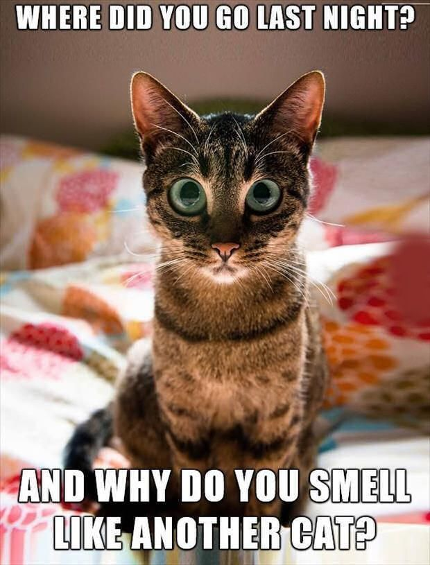 Where Did You Go Last Night Cute Animals Cat Cats Adorable Animal Kittens Pets Kitten Funny Pictures Funny Animals Funny Cats