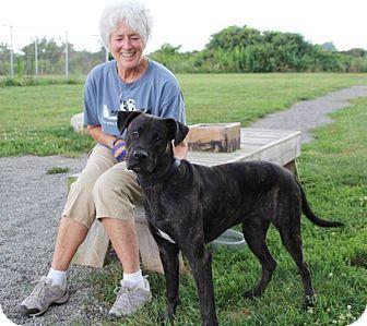 Elyria, OH - Mastiff/Boxer Mix. Meet Jax, a puppy for adoption. http://www.adoptapet.com/pet/13664766-elyria-ohio-mastiff-mix