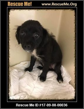 Urgent 3 Mo Old In A Kill Shelter Apollo S Angels Paterson Nj Rescue Animals Rescueme Id 17 09 08 00036 Animal Rescue Rescue Animals