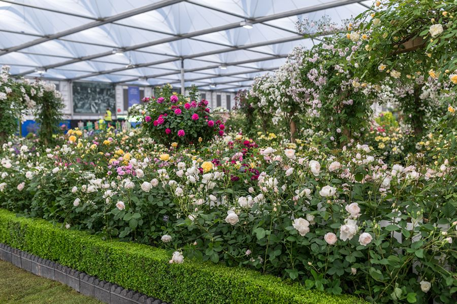 Our Exhibit, RHS Chelsea Flower Show 2018 Gallery