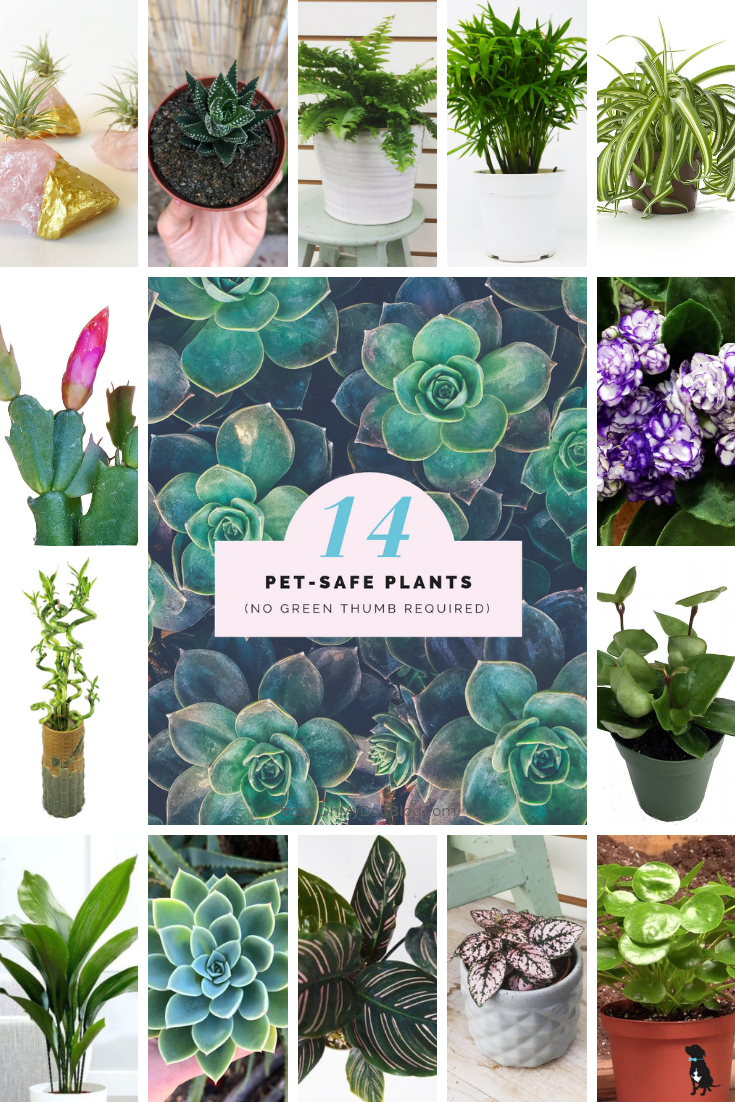 14 Pet Safe Plants You Really Can T Kill Safe House Plants Plants House Plants