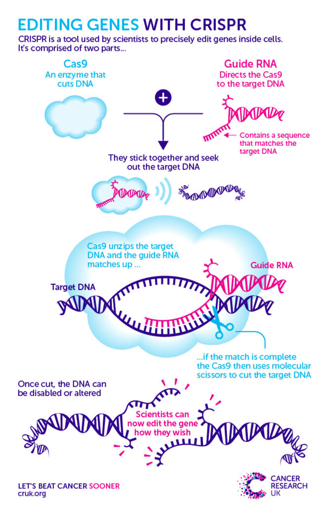 The Genetic Makeup Of An Organism Entrancing What Is Crispr And What Does It Mean For Genetics  Genetics And