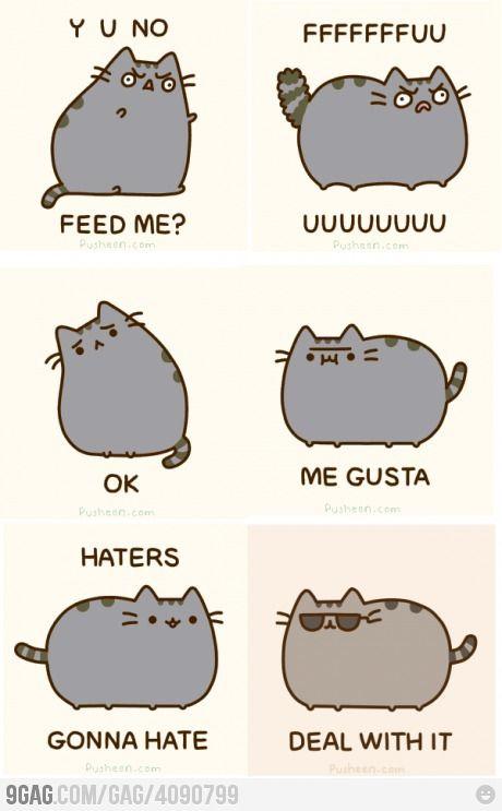 Story Of A Cat S Life Cat Memes Funny Cute Cats Cute Cat Drawing
