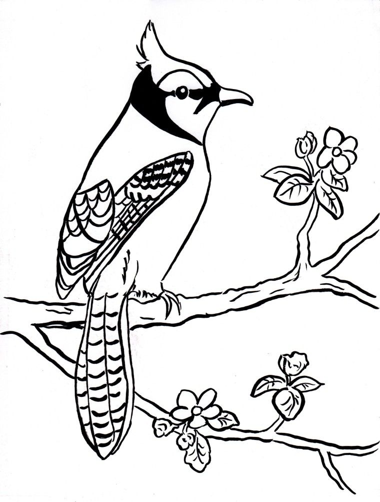 Blue Jay Coloring Page Samantha Bell Bird Coloring Pages Animal Coloring Pages Dog Coloring Page