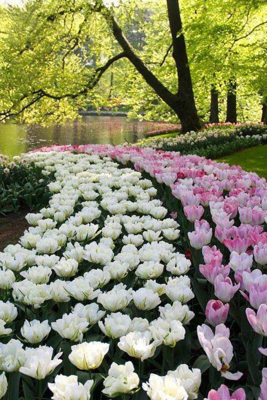 10H ĐÊM Ngắm hoa đêm muộn Beautiful flowers garden