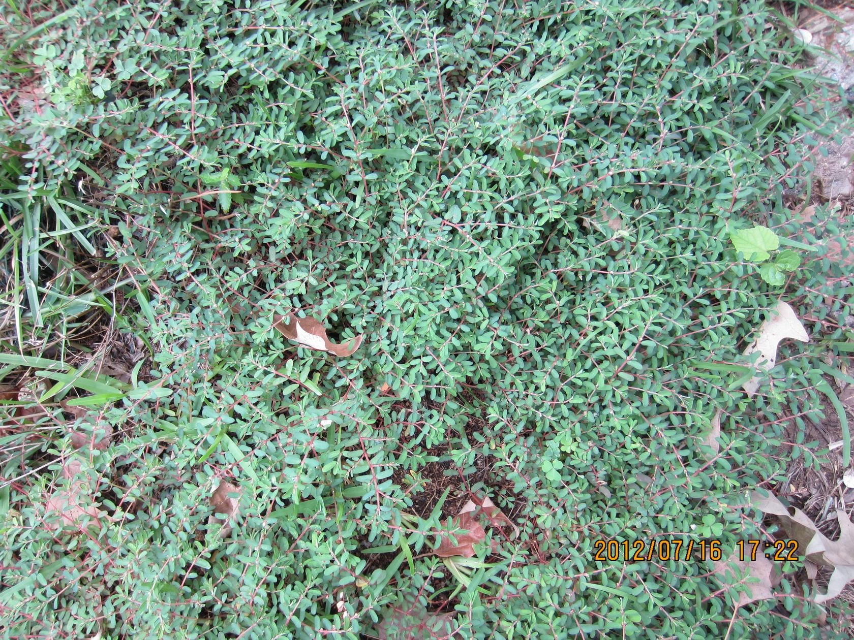 Identifying weeds in flower beds - Texas Grass Weed Identification Want To Be Able To Indentify Plants With Your Mobile Phone