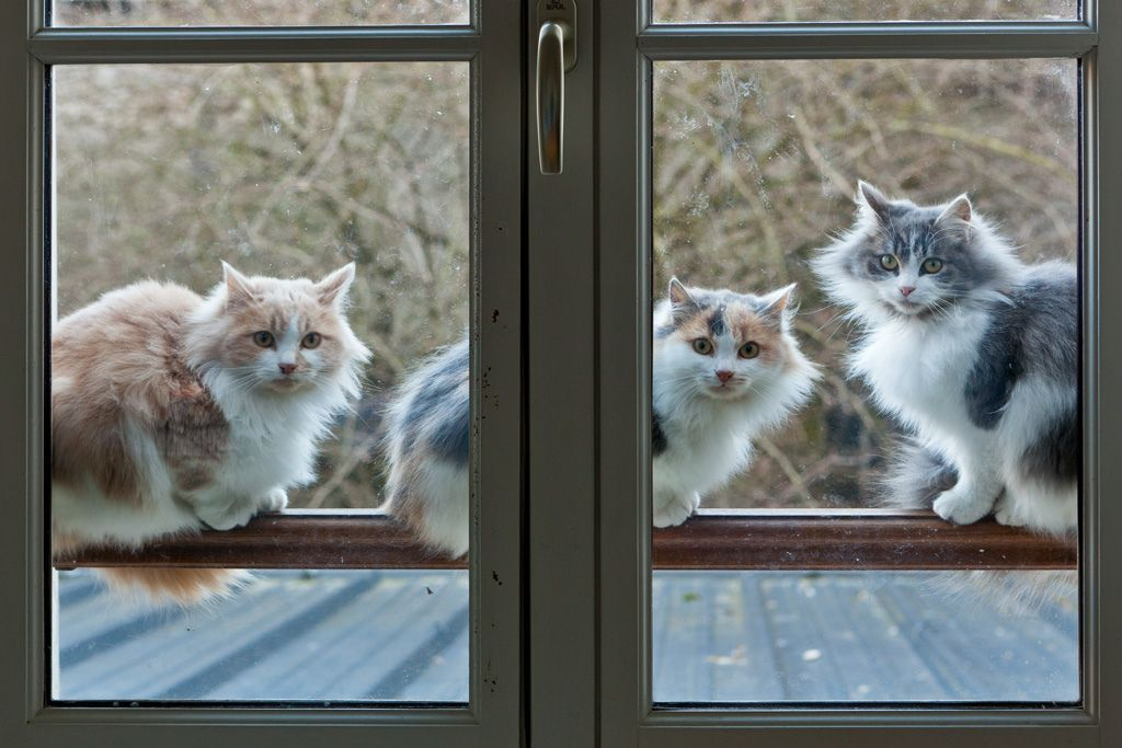 Cats on a Hot Tin Roof?