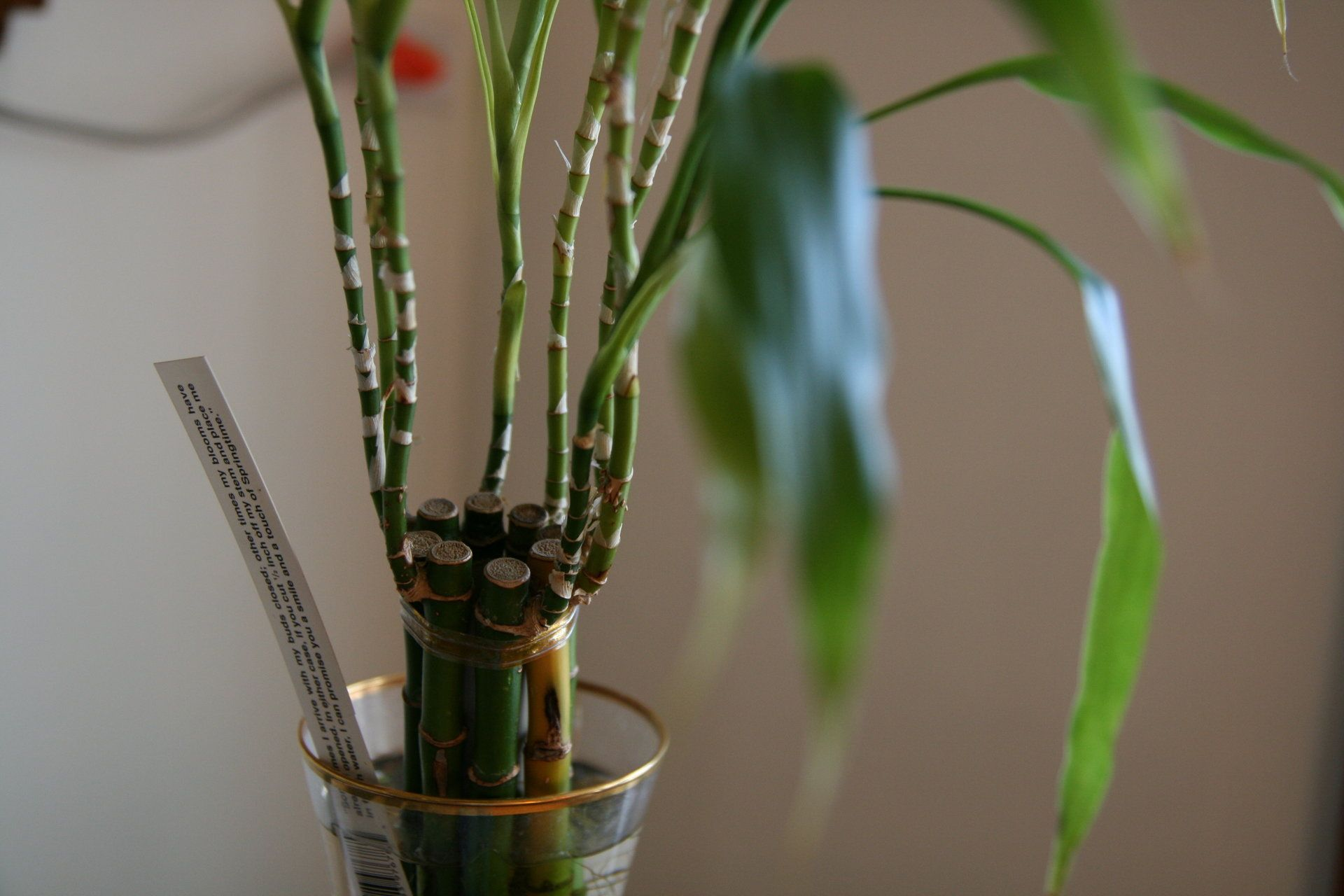How to care for bamboo plant growing propagating
