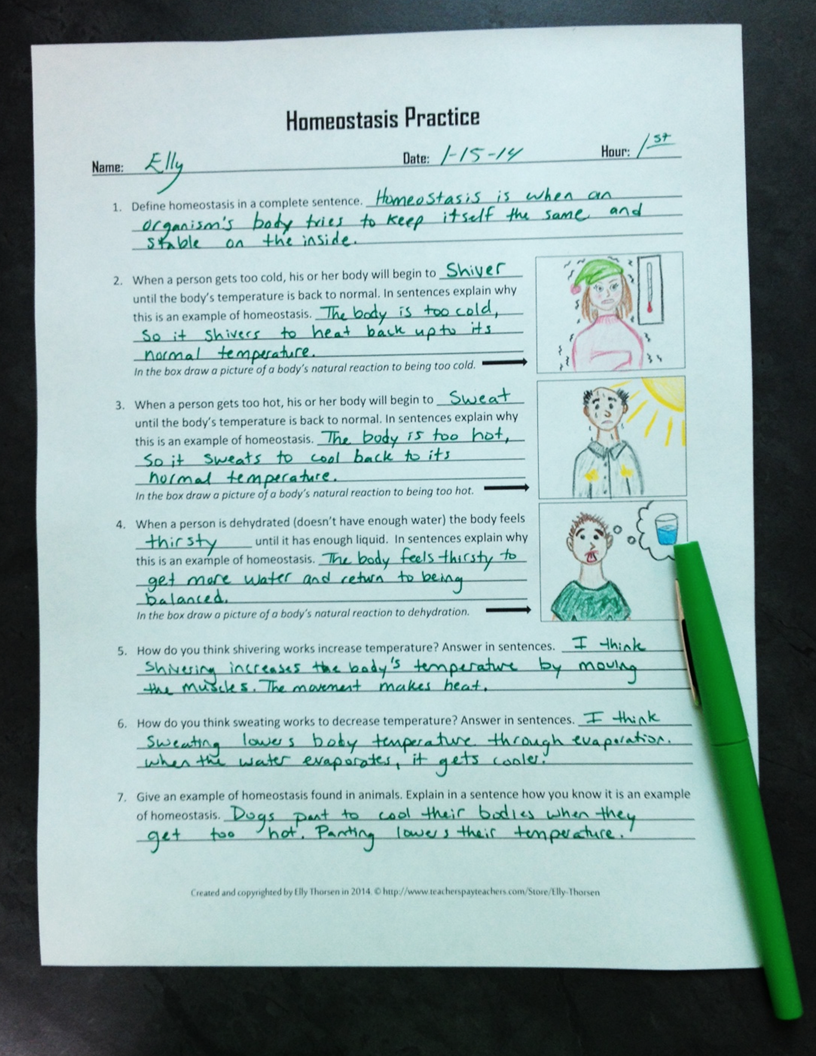 Homeostasis Practice Worksheet or Homework Assignment | Cells ...