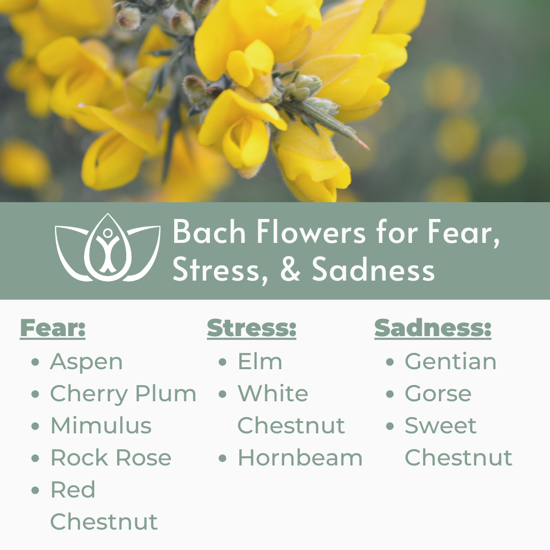 Bach Flowers For Fear Stress Sadness In 2020 Bach Flowers Flower Essences Flower Essences Remedies
