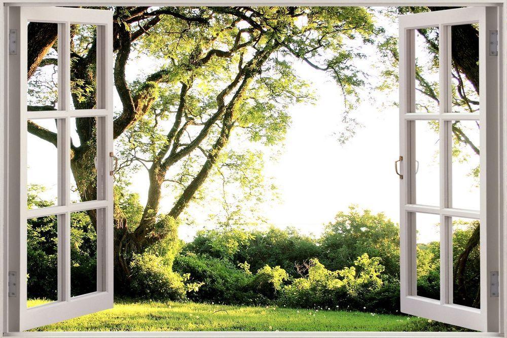 Днем, картинки окно в природу