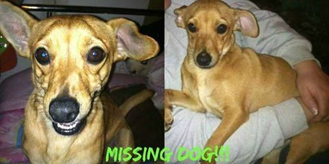 Lost Found Dogs West Virginia Lost Male Dog From Ashford Wv His Name Is Trigger He Has Nothing But Flea Collar The Tip Of Losing A Dog Flea Collar Dogs