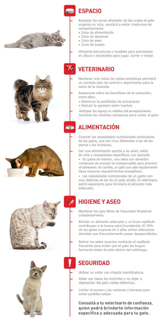 Infografia gatos infografia veterinaria pinterest cuidado del gatito el gato y gato - Cuidados gato 1 mes ...