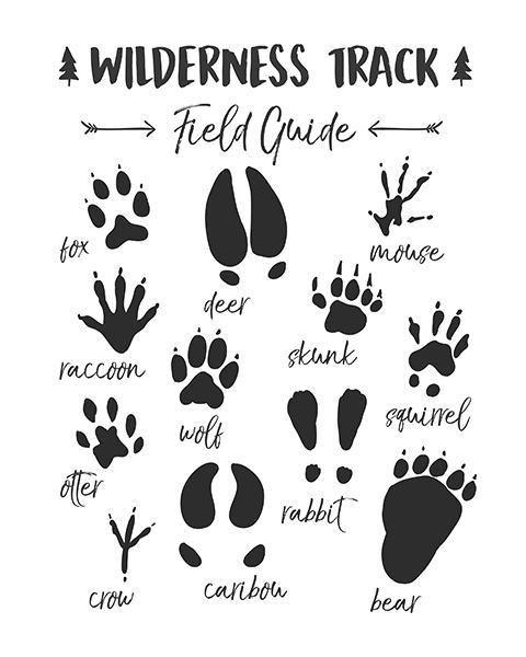 Animal Track Field Guide Woodland Nursery Woodland wall