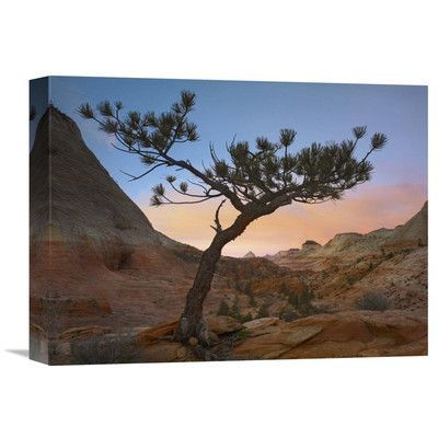 Global Gallery Nature Photographs Lone Pine Tree with East and West Temples in The Background, Zion National Park, Utah Photographic Print on Wrapp...