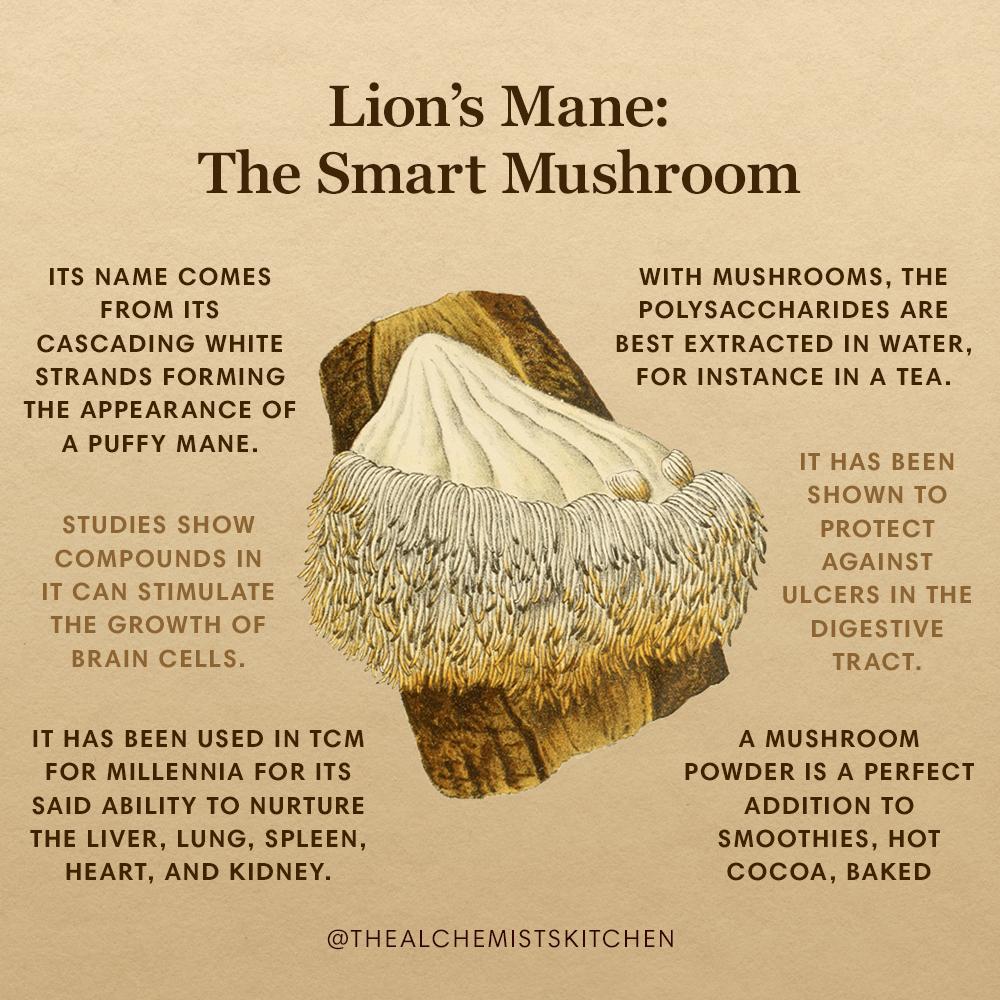 Lion's Mane: The Smart Mushroom