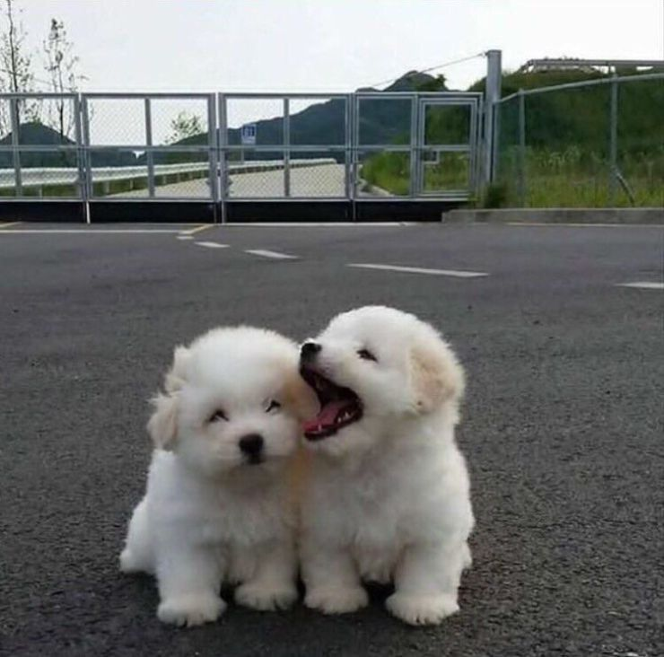 Dog Friendly Places In Cornwall Baby Animals Funny Cute Funny Animals Puppies