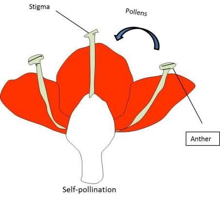 Reproduction in Plants | Plants, Diagram