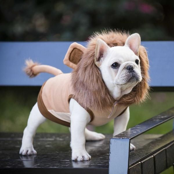 Cute Lion Warm Jacket For Frenchie BATPIG Pet Supply