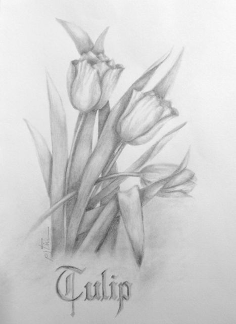 Tulips Pencil Drawings Tulip Drawing Pencil Drawings Of Flowers