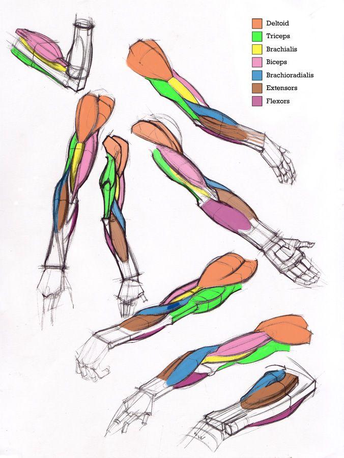 tumblr_m9zuqvFtVn1re2eono1_1280.jpg (676×900)   muscle   Pinterest ...