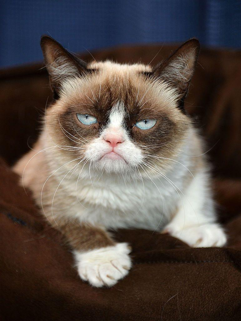 Sensation Grumpy Cat Has Died Grumpy cat, Cat