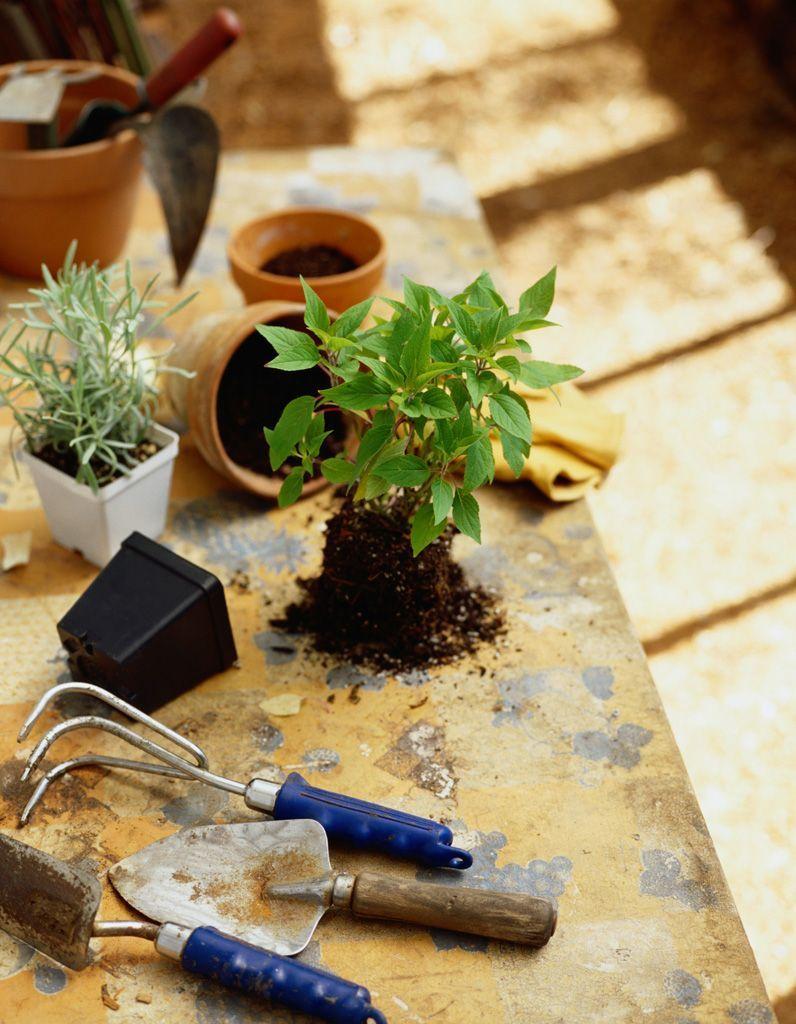 Rempotage : comment rempoter une plante ? - Elle Décoration | Plante, Yucca, Plante exterieur