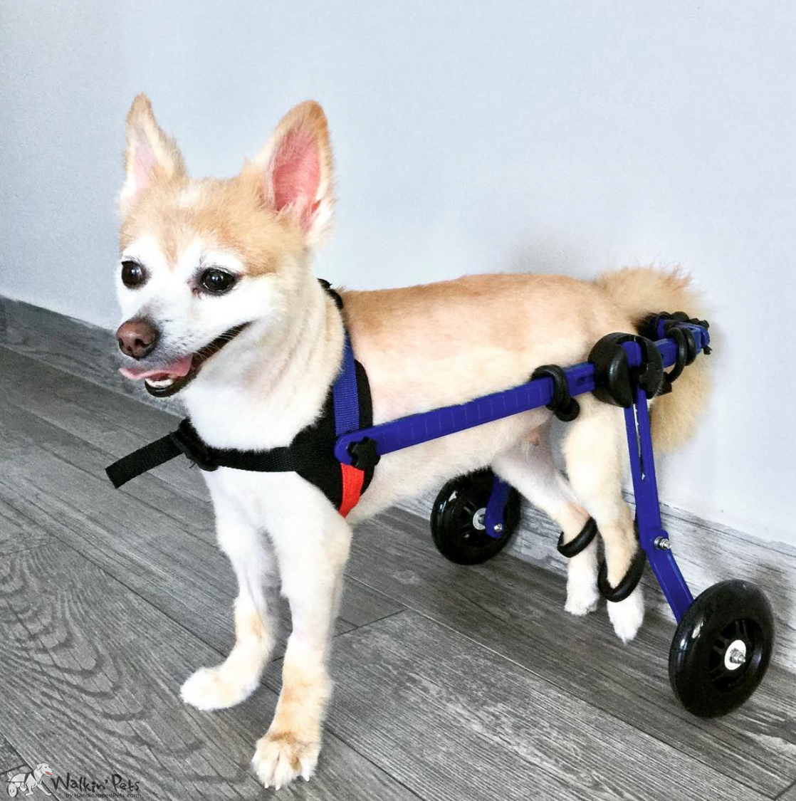Dog Wheelchair for Toy Breeds Cat Wheelchair Walkin
