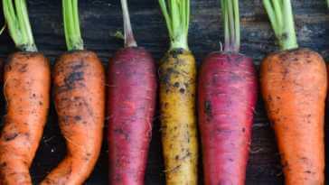 Monthly Organic Gardening eBook Kellogg Garden Organics