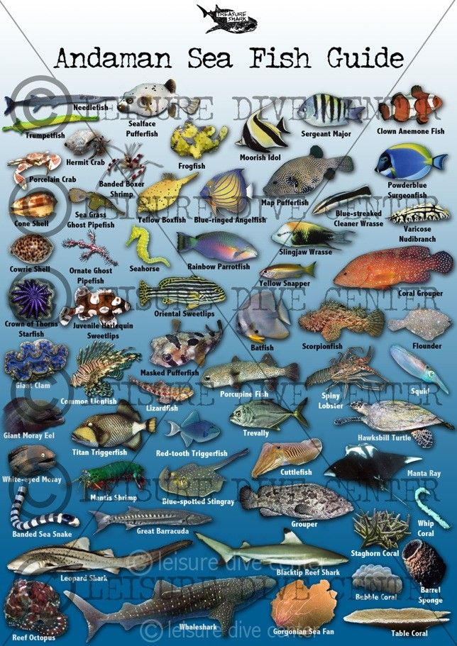 Phi Phi Fish Identification Fish Chart Sea Fish Marine Fish