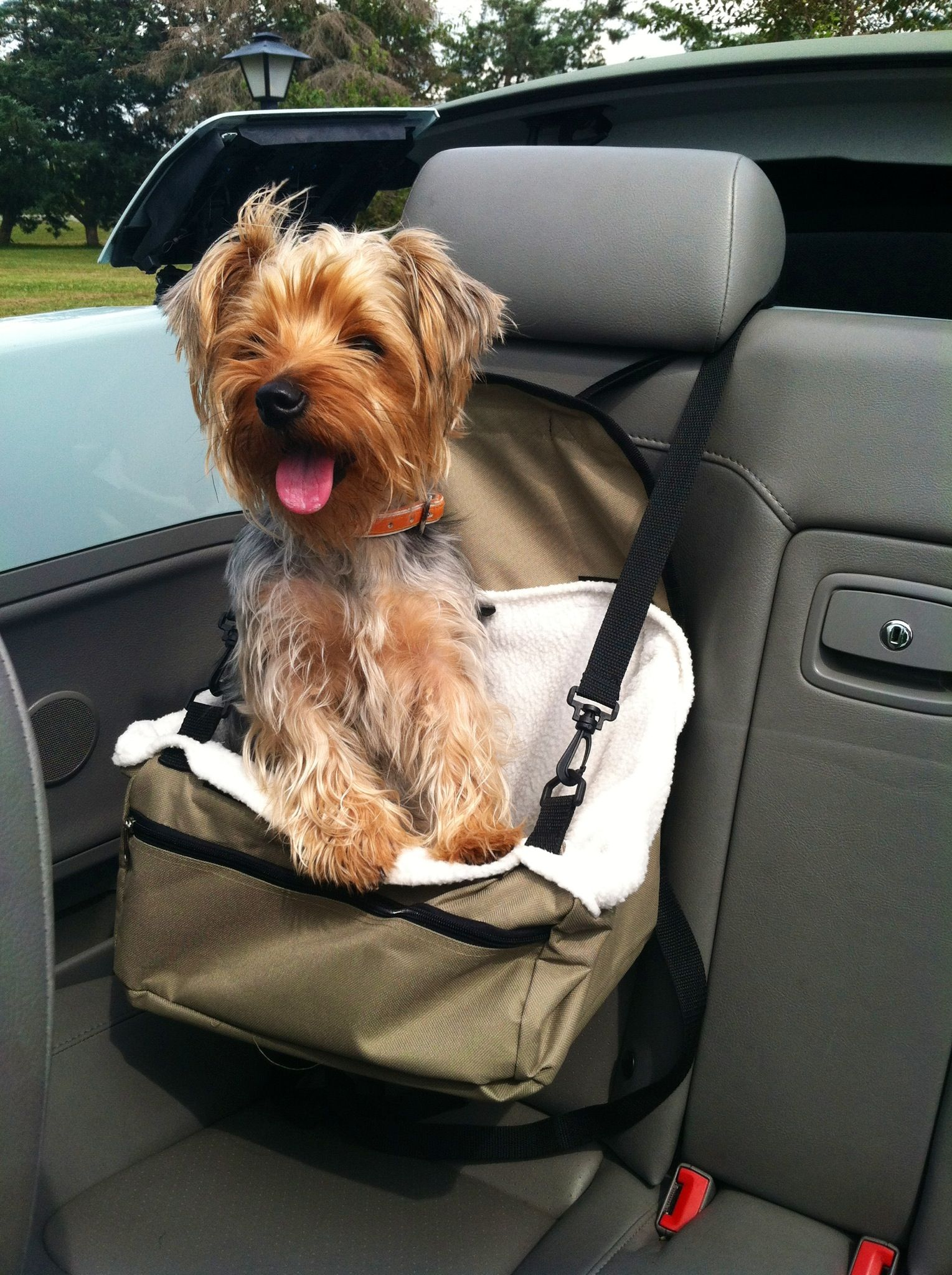 My Yorkie LOVES Her Car Seat Cute Puppy