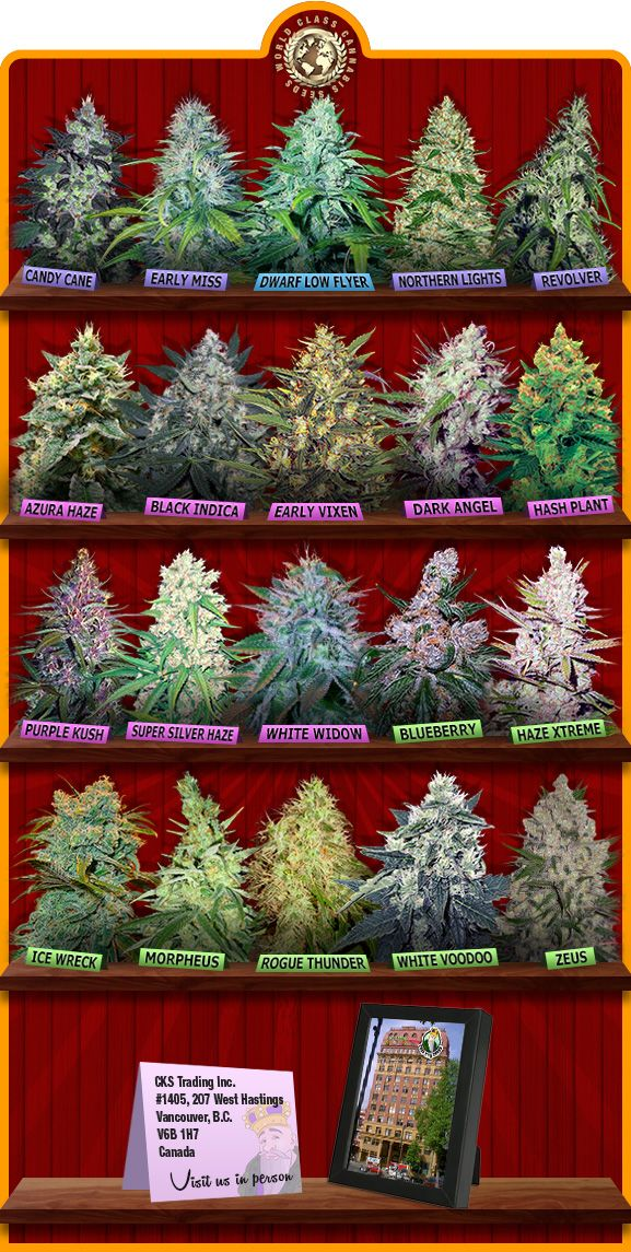 Affiliate Bake 420 Cannabis Weed Buy Cannabis Seeds