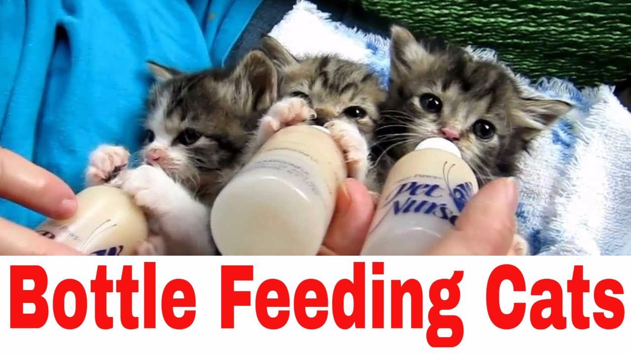 Bottle Feeding Newborn Kittens Jaguar Instagram