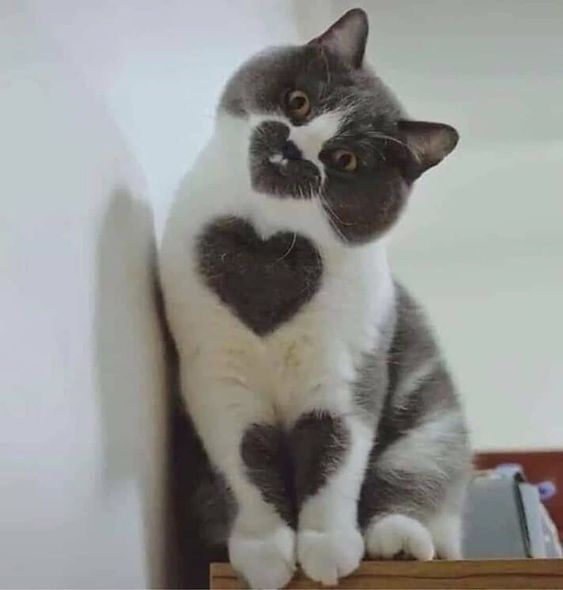 International Cat Day 6 Best Ways To Celebrate All Things Feline Cattime In 2020 Cute Baby Cats Cute Cats And Kittens Pretty Cats