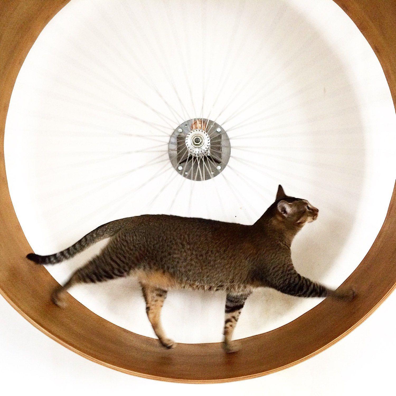Die mauer katze rad die wand bike f r katzen von biba 39 s etc - Kletterwand katze ...