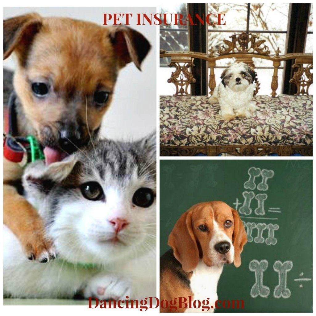 Pin on Dancing Dog Blog, Advice & HowTos