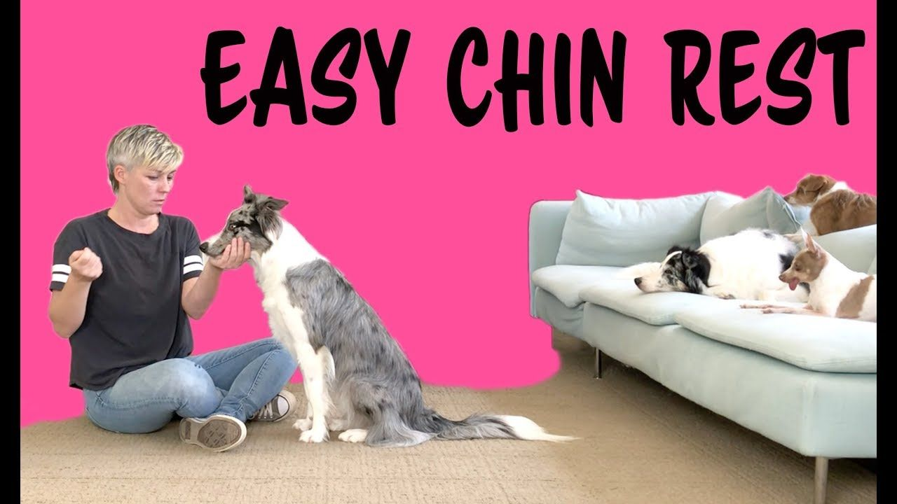 Easy Chin Rest Dog Training By Kikopup Dog Training