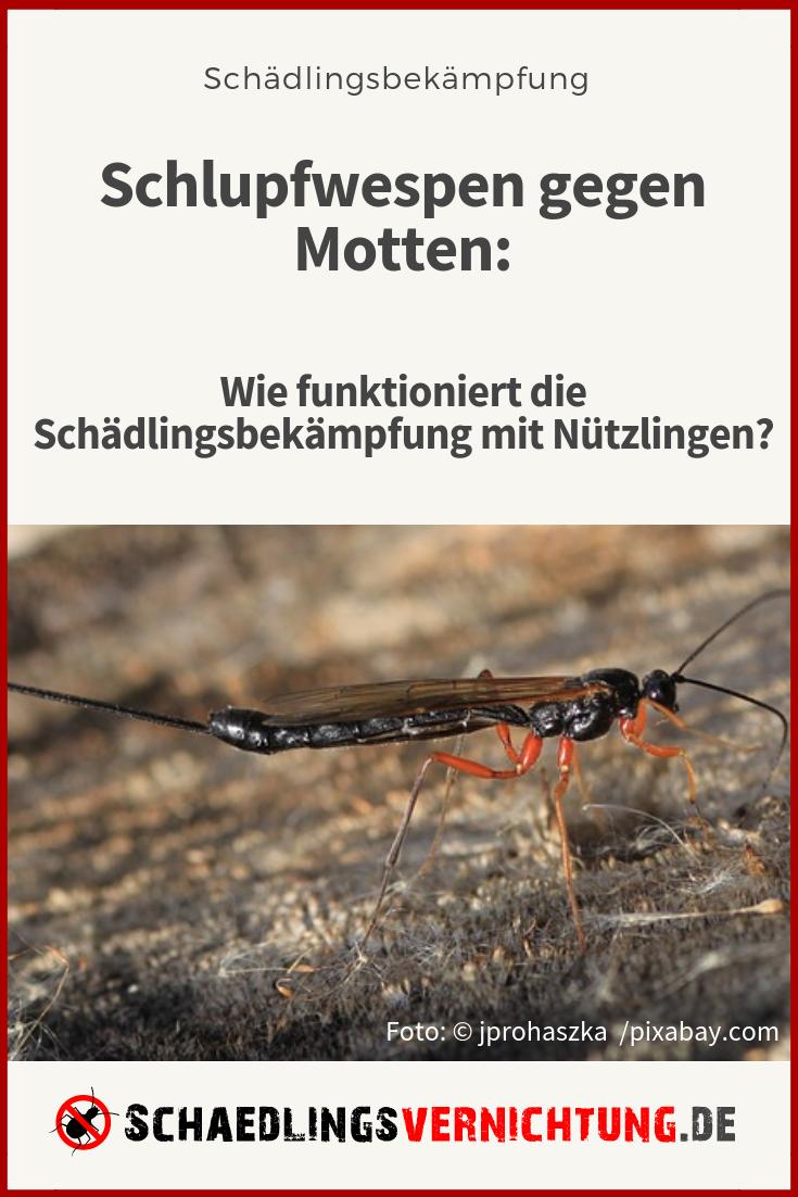 So Helfen Schlupfwespen Gegen Motten Haushaltsfee Org In 2020 Schlupfwespen Lebensmittelmotten Haushaltsfee