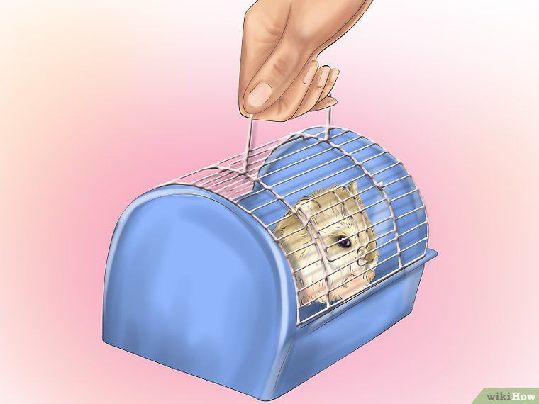 Care for Dwarf Hamsters