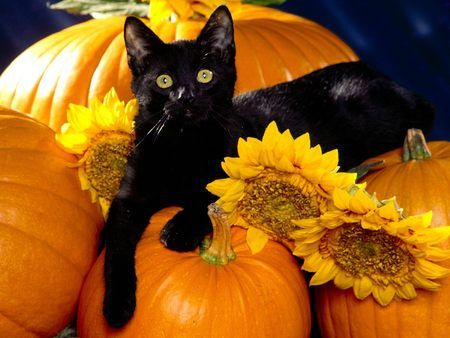 Black Cat on a Pumpkin - autumn, cat, fall, pumpkin, sooooooo cute ...