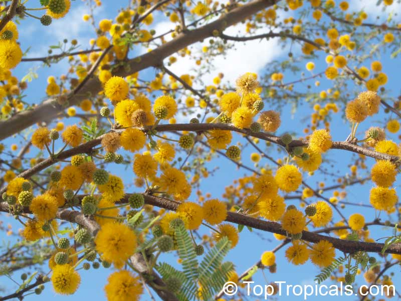 Pin On Flowering And Beautiful Trees