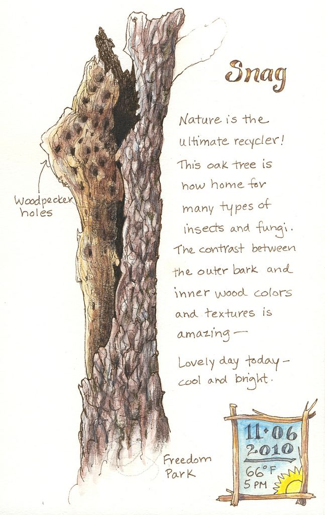 Sketching in Nature: Tree snag ~ Elizabeth Smith