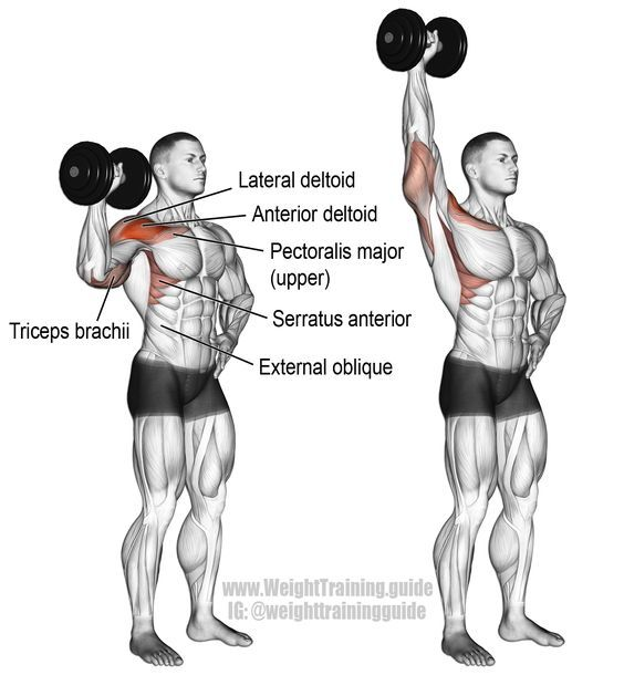 Groovy Dumbbell One Arm Overhead Press Instructions And Video Short Links Chair Design For Home Short Linksinfo