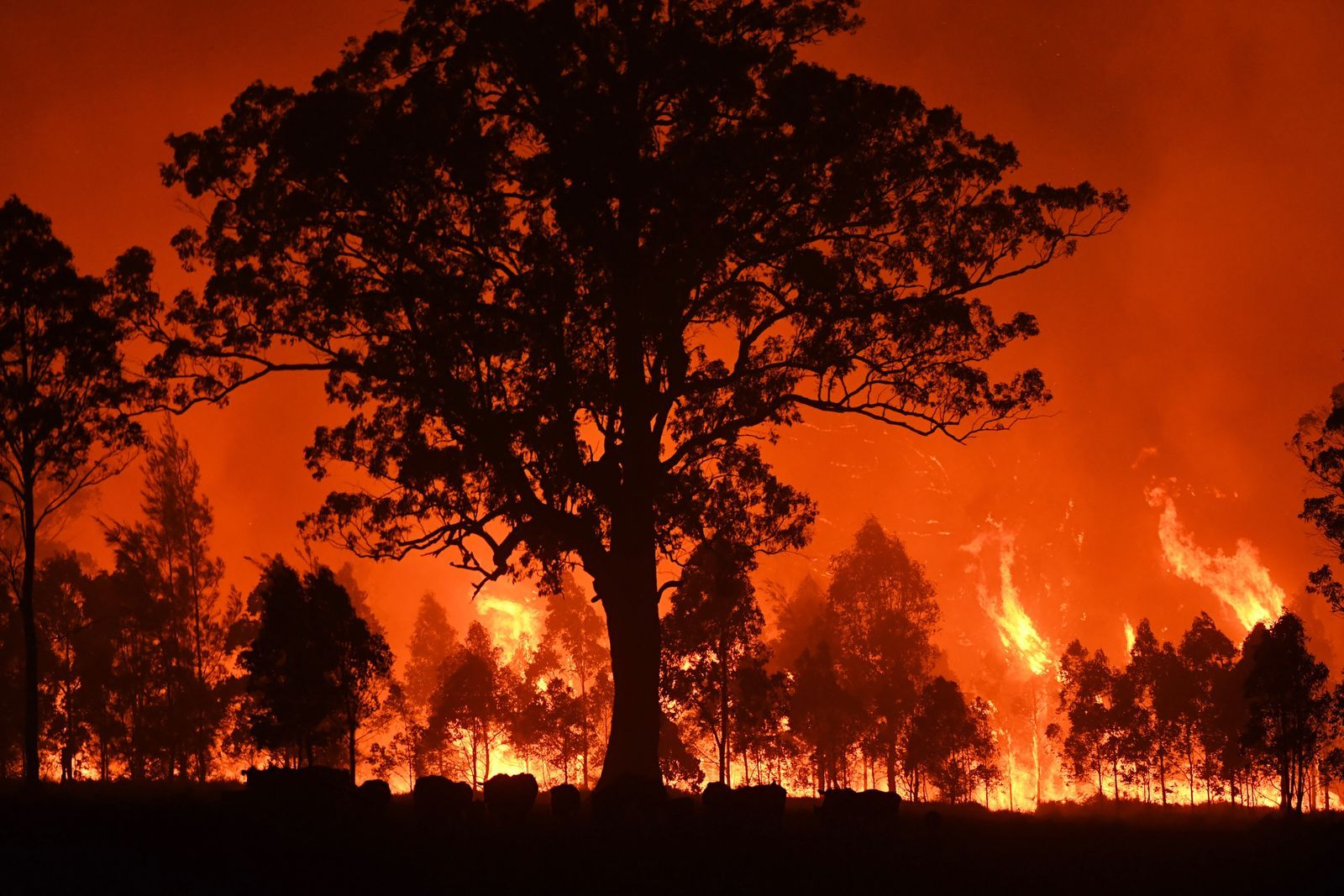 How to help those affected by the Australia bush fires in
